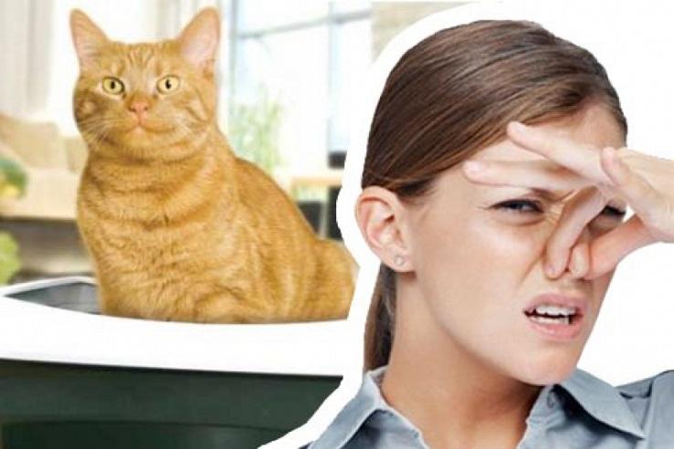 Запах мочи домашних животных в Стерлитамаке